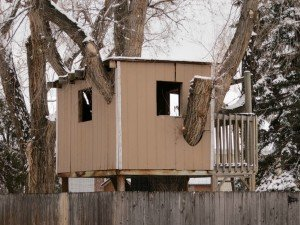 A tree house is built around a tree with walls and windows.