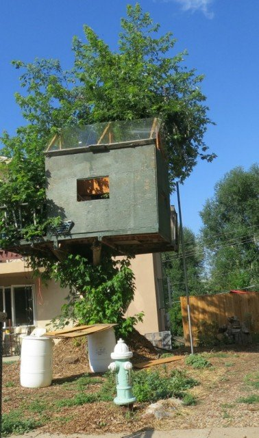 tree house in baseline sub