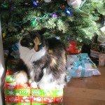 a cat on a box