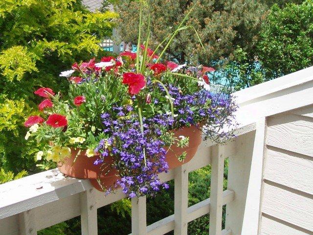 colorful flower basket on deck in boulder colo