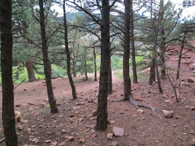 sparse trees in hiking area