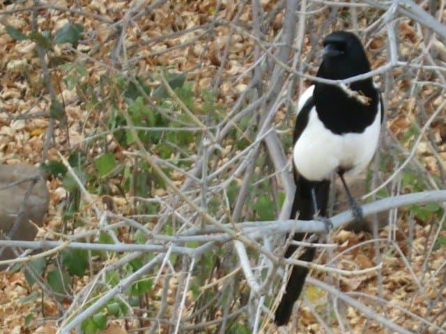 wild bird chautauqua boulder co