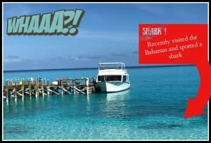 photograph of a white passenger boat next to a dock with a shadow that could be a shark in the front right corner. written across the picture whaaa and the statement I saw a shark in the bahamas on a recent visit