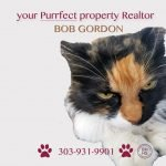 beautiful cat with the wording your purrfect property realtor bob gordon 303-931-9901