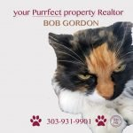 cat ad for realtor bob gordon