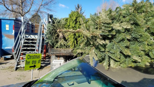 lafayette colorado christmas tree recycling