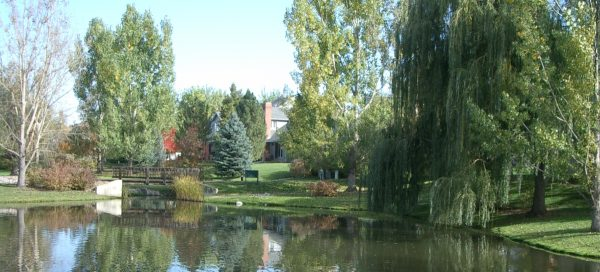 secret pond in northeast boulder with water reflecting landscaping