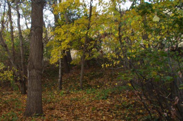 woods in lafayette colorado